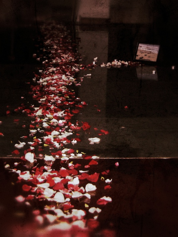 2 Years Ago Today - Rose Pedals on Floor