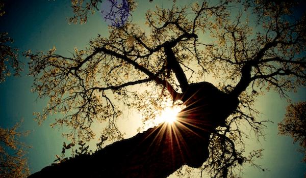 Growing in Christ - Tree Growing