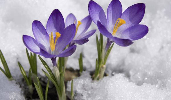 Springing to Life